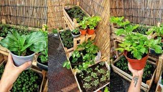 HOW TO START APARTMENT INDOOR GARDEN ZERO WASTE STYLE | Growing own Veggies from Scraps.