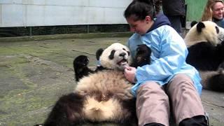 Pandamonium :)