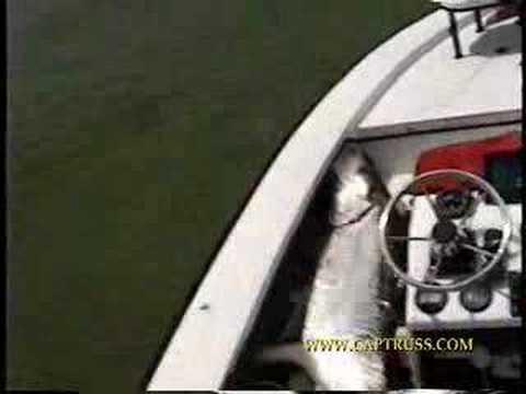 Florida West Coast Tarpon Fly Fishidng
