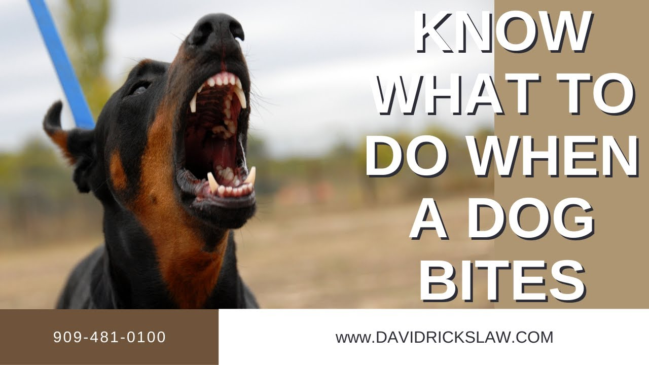 Know What to do When a Dog Bites | California Dog Bite Laws