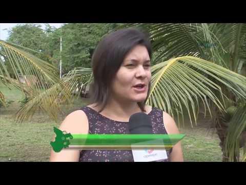 Embrapa alerta para praga letal do coqueiro