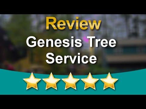 Tree Removal Service Stafford Va Genesis Tree Service