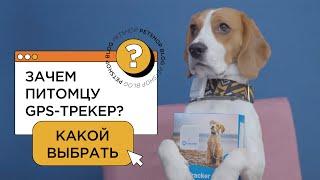 10 крутых вещей для собак и их владельцев