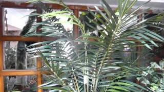 Artificial Plants at Riddhis Aesthetics, Banjara Hills, Hyderabad