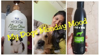 My dogs Monday Mood Vlog / FORBIS  & HUG N WAG SHAMPOO FOR DOGS Cats REVIEW