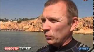 Акула-людоед в Красном море