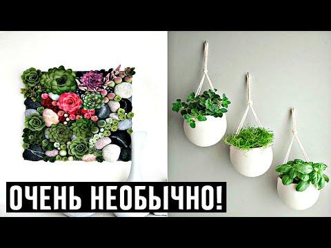 Ваши гости будут в шоке! 20 сочных примеров вертикального размещения комнатных растений!