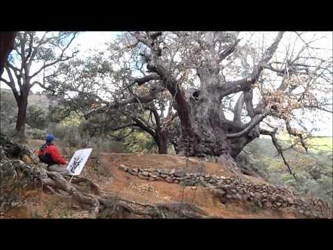MARBELLA PARADISE TRIP: Castaño Santo con Monte Aventura