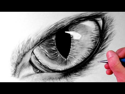 How To Draw A Cat Eye Steemit