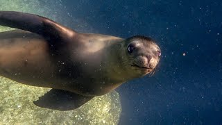 The Sea Lion Colony of La Paz | Mexico