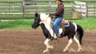 Nad - Icelandic Pony for Sale
