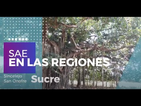 SAE en el territorio: Sincelejo, Sucre