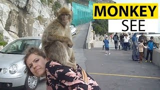 animale maimute comice