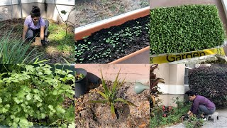 #StayAtHome Garden Cleaning Planting Vegetable Herbs Video Vlog | Bhavna's Kitchen