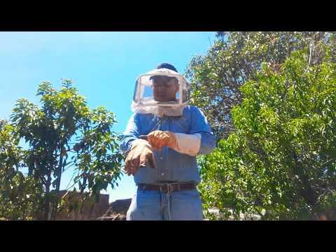 , title : 'Principiante apicultor sígueme te enseñaré como tener tus abejas naturalmente