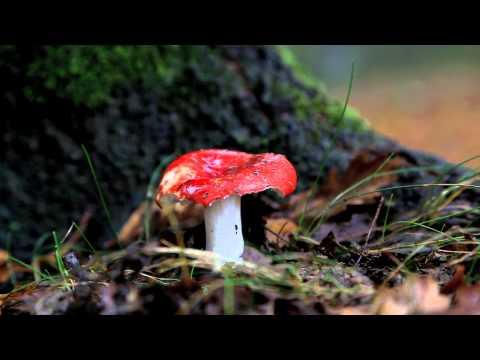 Vartner da un fungo di unghie il prezzo