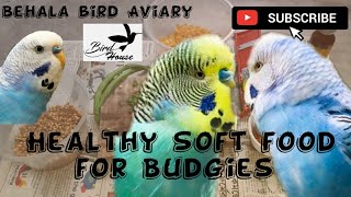 Healthy soft food for buddgies parrot. Important tips for budgies Parrots. Behala Birds Aviary