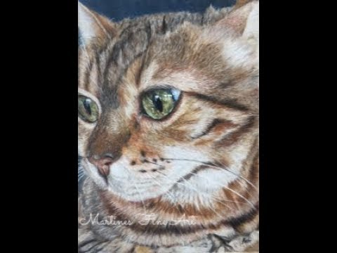 Creating Cat Fur In Colored Pencil, On Sanded Paper With The Brush And Pencil Supplies