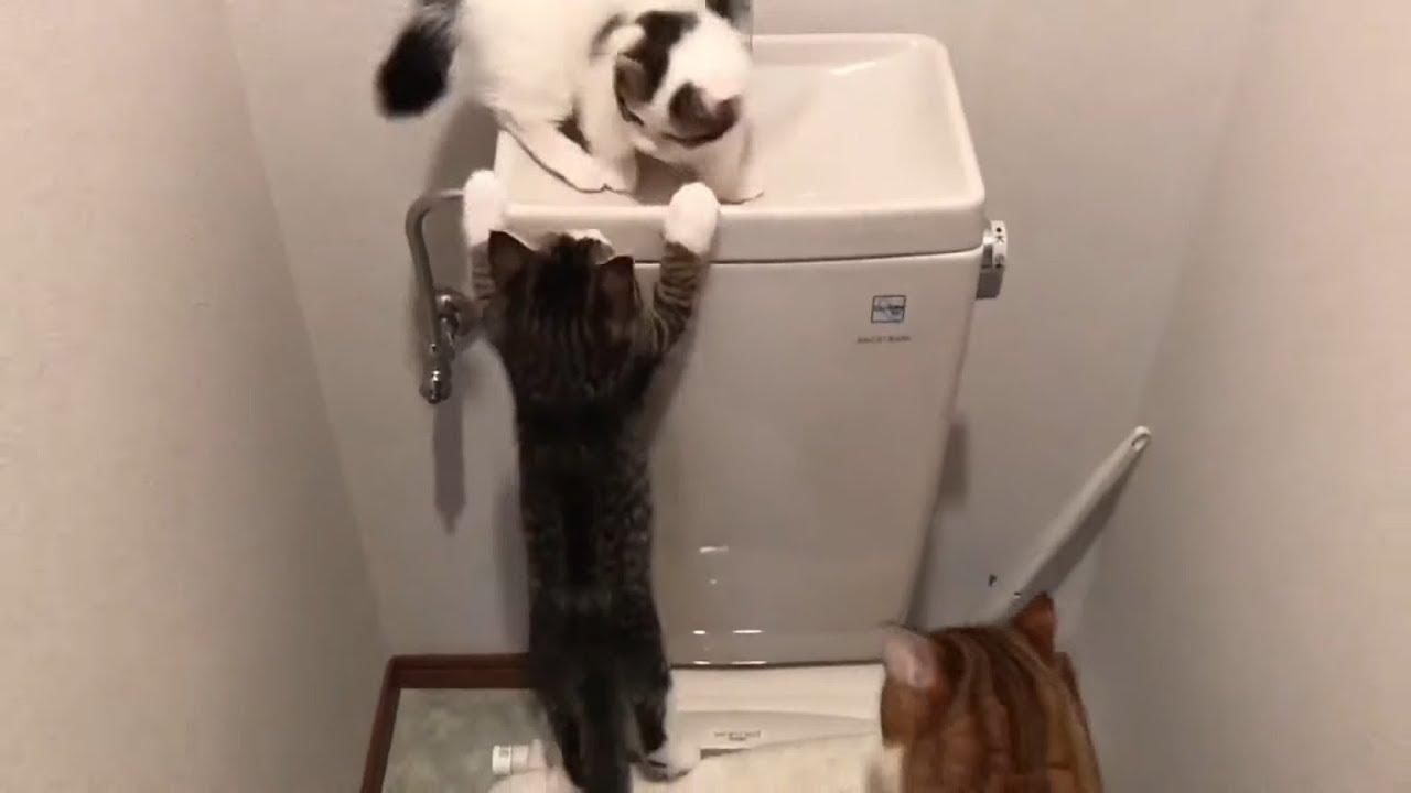 留守の間に起こったトイレの惨劇【ひのき猫の近況】