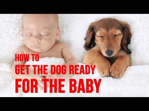 4 Things To Do To Prepare Your Dog For Your Baby's Arrival