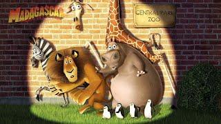 Madagascar 1 (2005) Movie Explained in Hindi/Urdu   Fantasy Film Summarized in हिन्दी