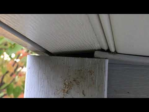 A customer in Manalapan, NJ called our office complaining about bees inside her home. As we inspected, didn't find anything inside her home, however we examined the exterior of the home and noticed a stain on the corner beam of the home.