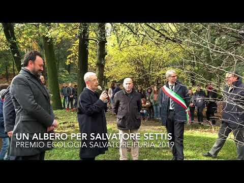 Un albero per Salvatore Settis