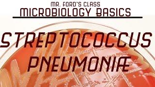Streptococcus pneumoniae and  Bacterial Meningitis : Microbiology Lectures