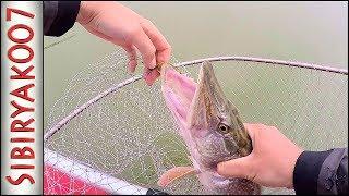 Отводной поводок с поролоновой рыбкой