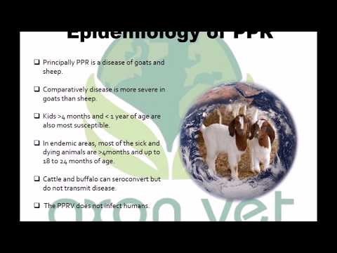 Video PPR in Goats
