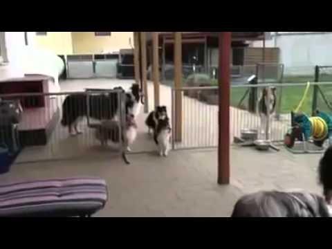 Cães Educados 3