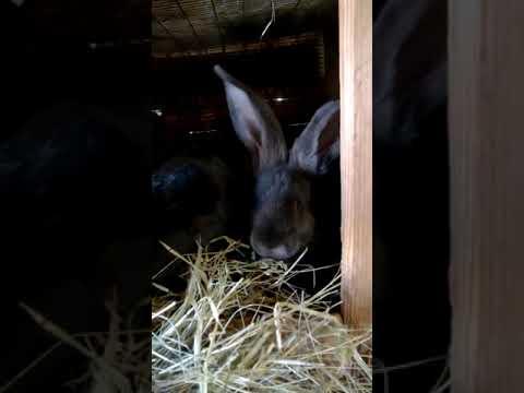 Наше кроличье хозяйство,видео от 2017 года.
