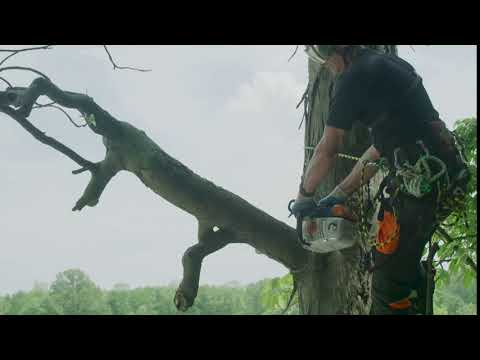 Stihl MS 194 T in Mio, Michigan - Video 1