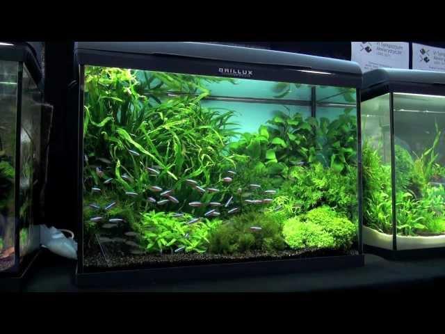 Aquascaping - Aquarium Ideas from PetFair 2011, part 3