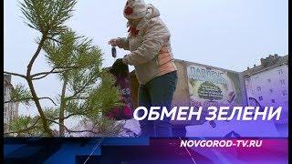 В Великом Новгороде вторсырье снова можно обменять на саженцы