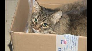 Как бездомная кошка спасла ребенка, брошенного матерью у мусоропровода, и что случилось потом