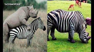7 ANIMALES HÍBRlDOS Que NO CREERÁS Que EXISTEN