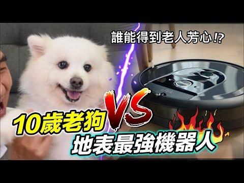 10歲老狗 VS 地表最強機器人!