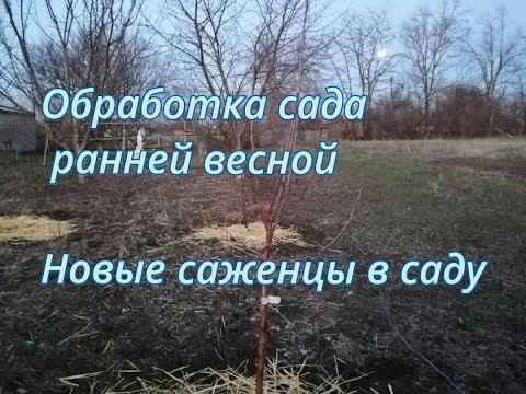 Обработка сада ранней весной (обмывка деревьев), новые саженцы в саду