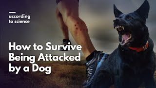 How to Survive a Dog Attack, According to Science
