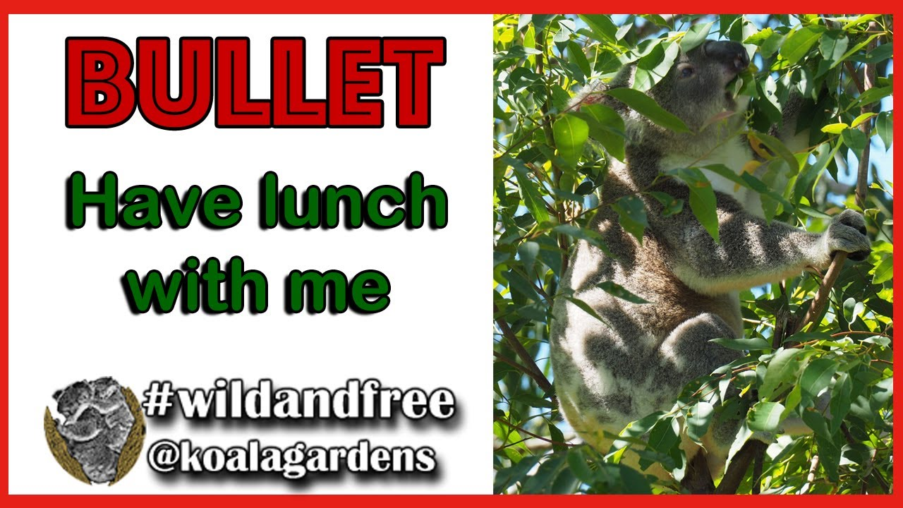 Come to lunch with BULLET