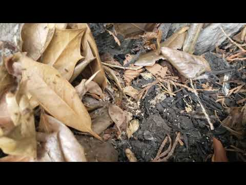 Angry Ant Colony Hiding in Bait Station in...