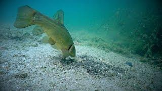 Рыбалка в выборге лето 2020 линь
