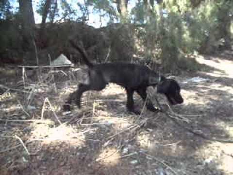 Charm, ein Hund in Not aus dem Tierschutz