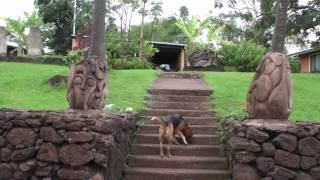 preview picture of video 'Tauraa Hotel Tour in Hanga Roa, Easter Island'