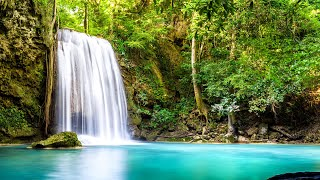 Morning Relaxing Music - Bird Sounds, Water Sounds, Peaceful Soothing, Sleep Music, Stress Relief