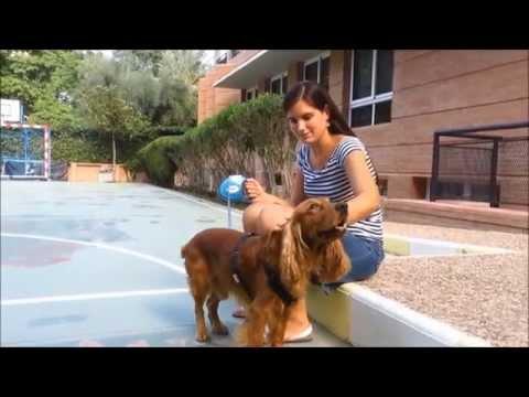 Ver vídeoSíndrome de Down: Irene nos habla de su perro Toy