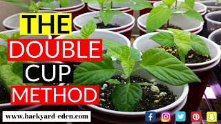 How to start pepper seeds using the double cup method