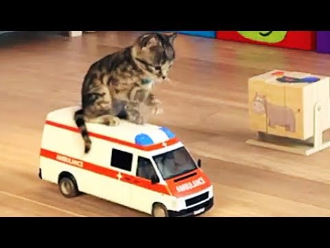 My Favorite Cat Play Fun Little Kitten Cartoon Pet Care Games