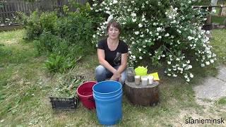 Травяной настой. Как приготовить и использовать на своём огороде.